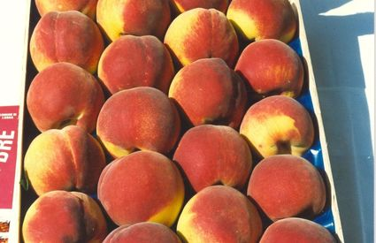 Box of Queen Peaches of Londa