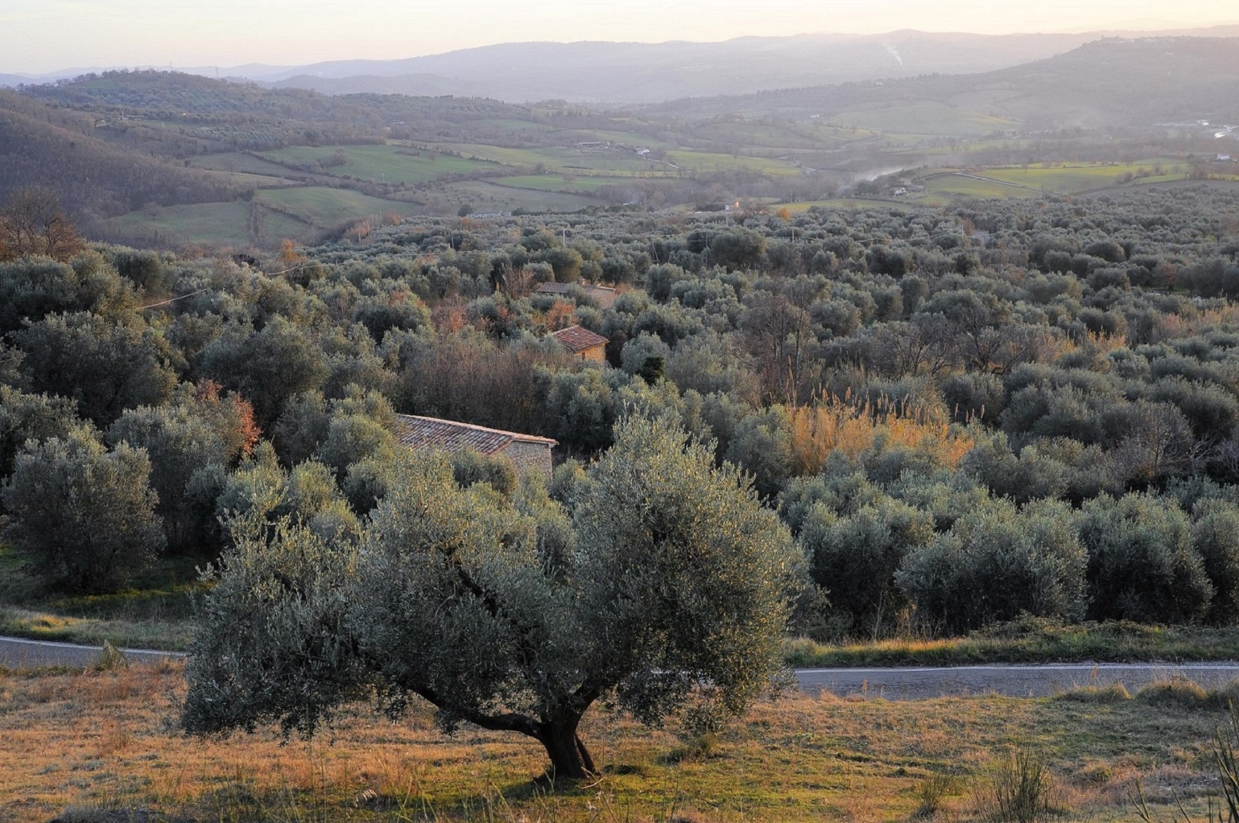 Semproniano - Memorie di un guardiano immortale - Tuscany, Beautiful Everywhere