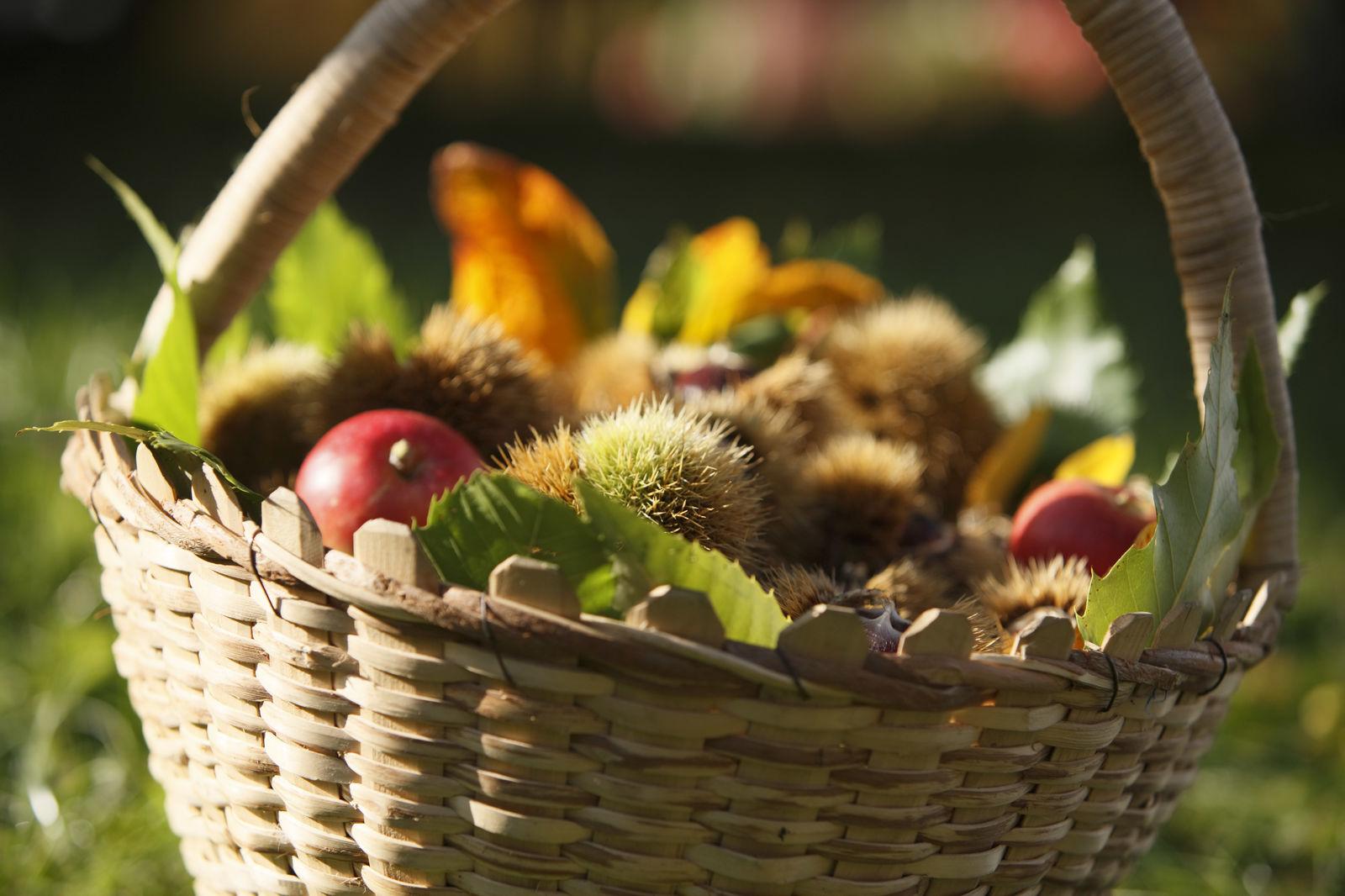 Marradi - Dall'albero del pane alla torta di marroni - Toscana Ovunque Bella