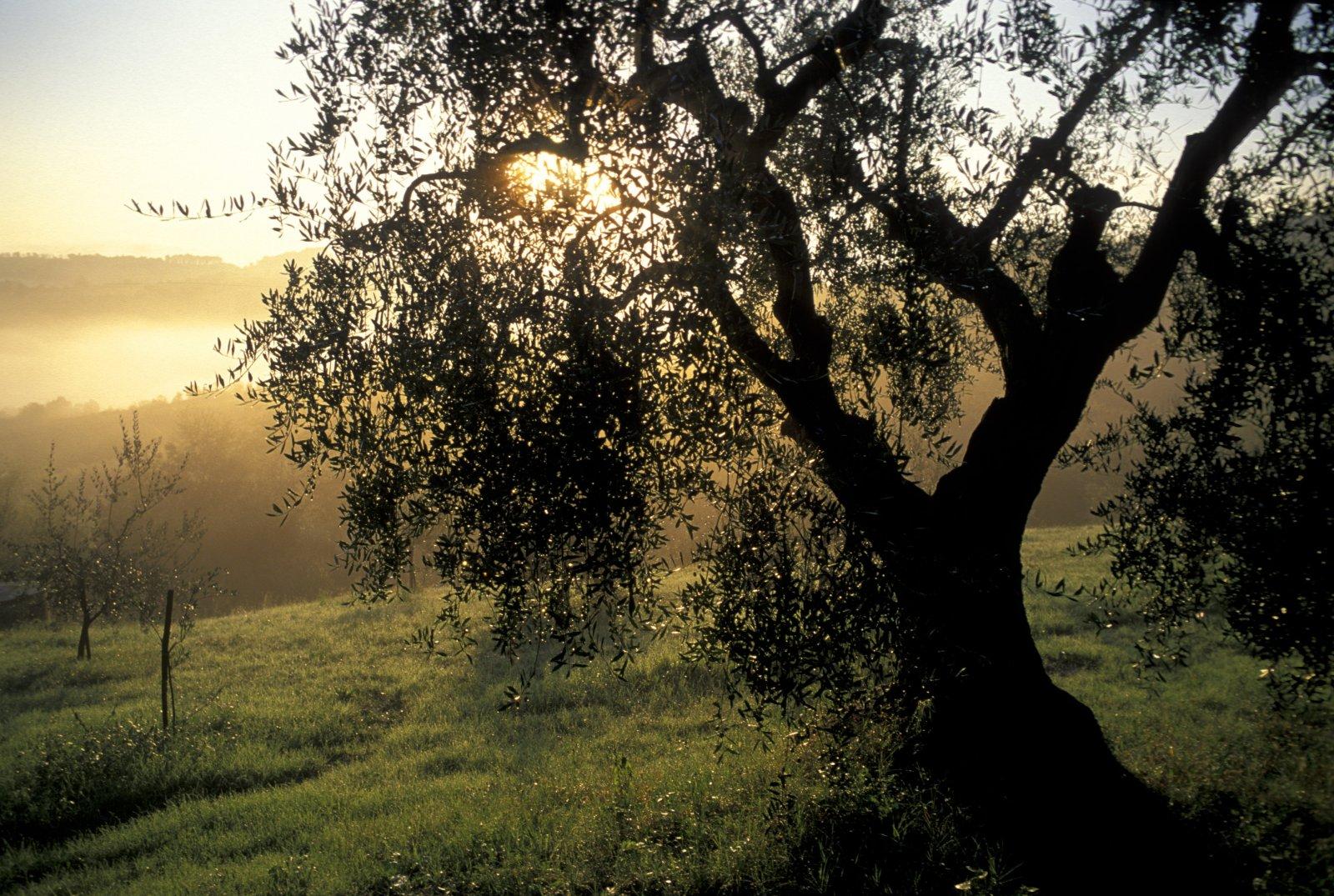 San Miniato - La Toscana in tutti i suoi aspetti - Toscana Ovunque Bella